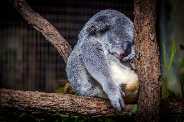 Schlafen is ne wichtige Form der Regeneration