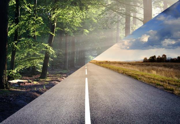 Straße vs. Wald