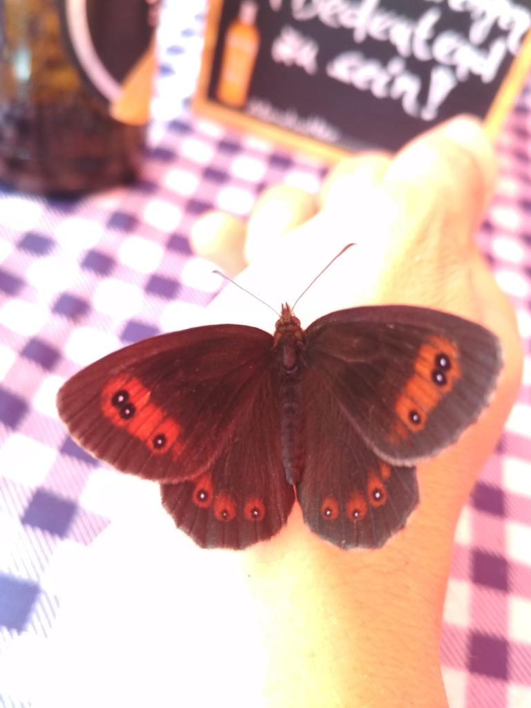 Schmetterling zeigt das erwachen der Laufwelt