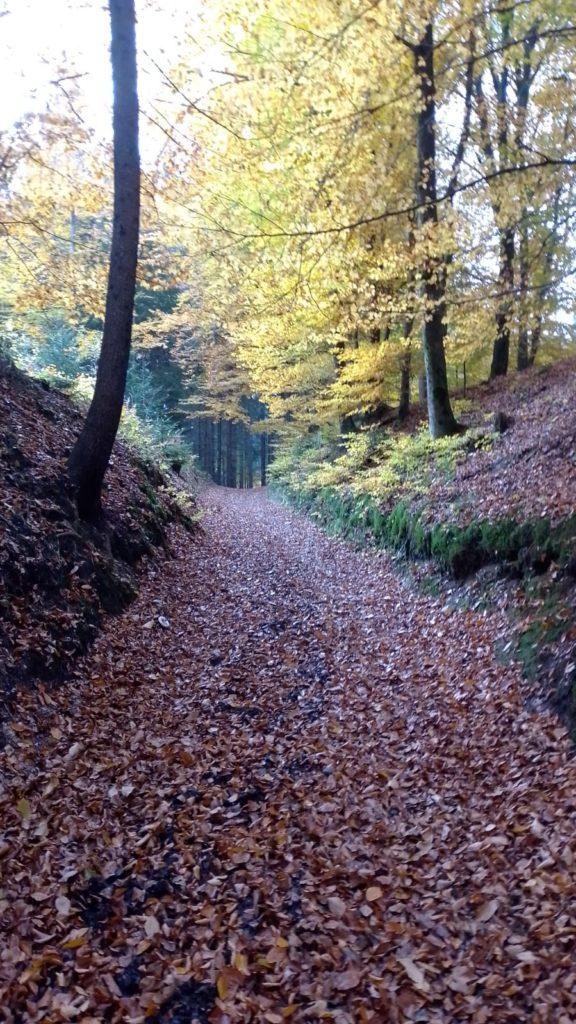 Waldweg als Ausdruck des Ungewissen
